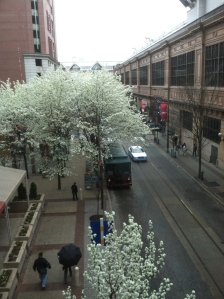 Blossoming Trees near Philly Convention Center